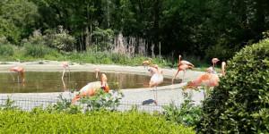 Projektový den mimo MŠ - Návštěva Zoo Ostrava - 1622749031_20210603_115614.jpg